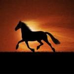 sognare-cavallo-significato-interpretazione-numeri-puledri