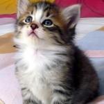 sognare-gatto-significato-interpretazione-numeri-felino