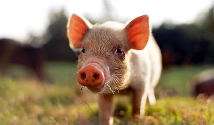Panpa organizzatore cartone animato animale maiale stampato