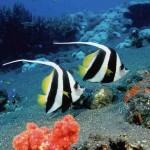 sognare-pesci-significato-interpretazione-numeri