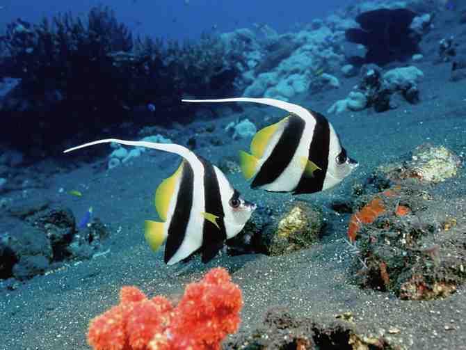 Sognare pesci interpretazione numeri for Sfondi pesci tropicali