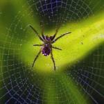 sognare-ragni-significato-interpretazione-numeri-aracnofobia