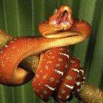 sognare-serpente-significato-interpretazione-numeri-serpe-vipera