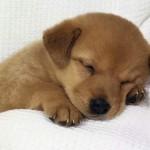 sognare-cane-significato-interpretazione-numeri