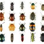 sognare-insetti-significato-interpretazione-numeri