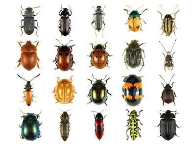 Sognare insetti interpretazione numeri - Insetti piccolissimi neri nel letto ...