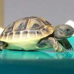 sognare-tartaruga-significato-interpretazione-numeri
