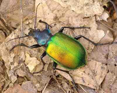 Sognare gli scarafaggi interpretazione numeri - Insetti piccolissimi neri nel letto ...