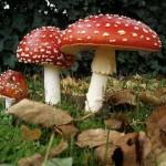 funghi-simbologia-sogno