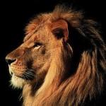 leone-psicologia-jung-freud