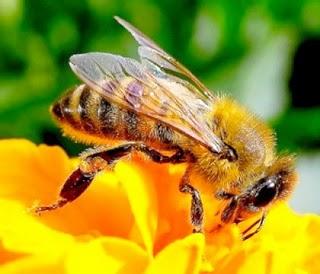 Sognare api interpretazione numeri for Planimetrie delle case dei sogni dei kentucky