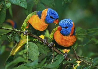 Sognare Uccelli Interpretazione Numeri Sognipedia It