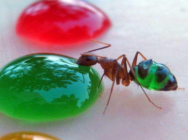 Sognare le formiche addosso avere la presenza di formiche sul corpo