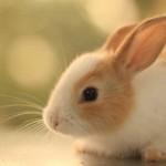 coniglietto-tenero