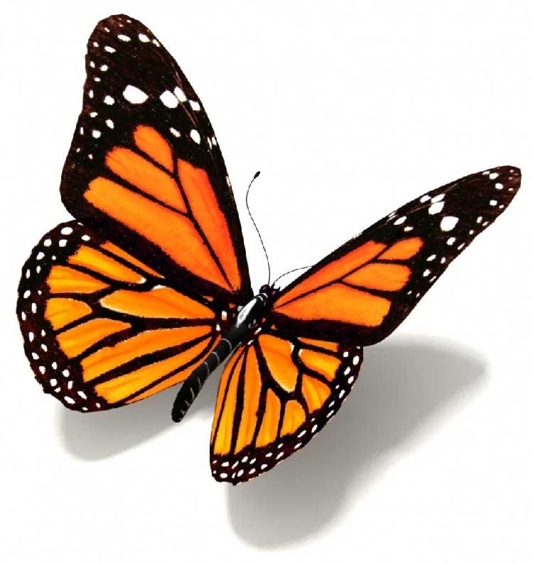 Sognare farfalle interpretazione numeri for Immagini farfalle da ritagliare