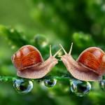 lumache-coppia