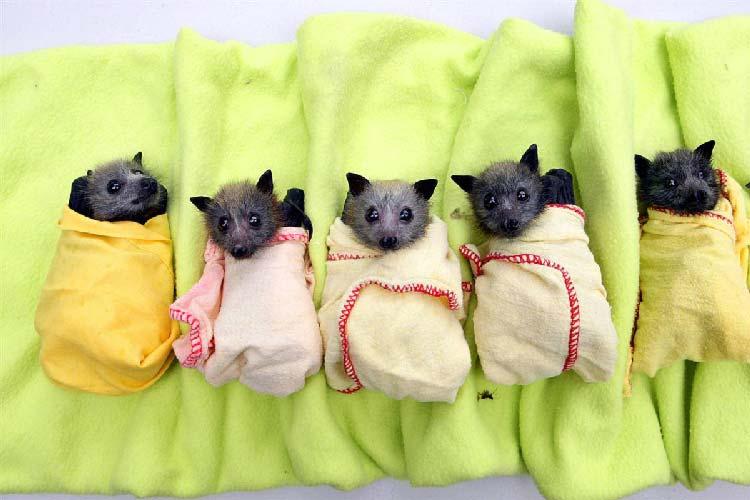Sognare Soffitti Alti : Sognare pipistrelli interpretazione numeri sognipedia