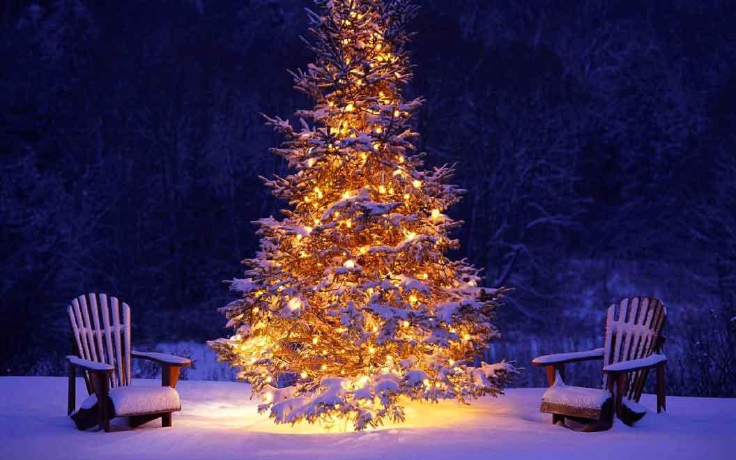 Albero Di Natale Sogno.Sognare Alberi Interpretazione Numeri Sognipedia It